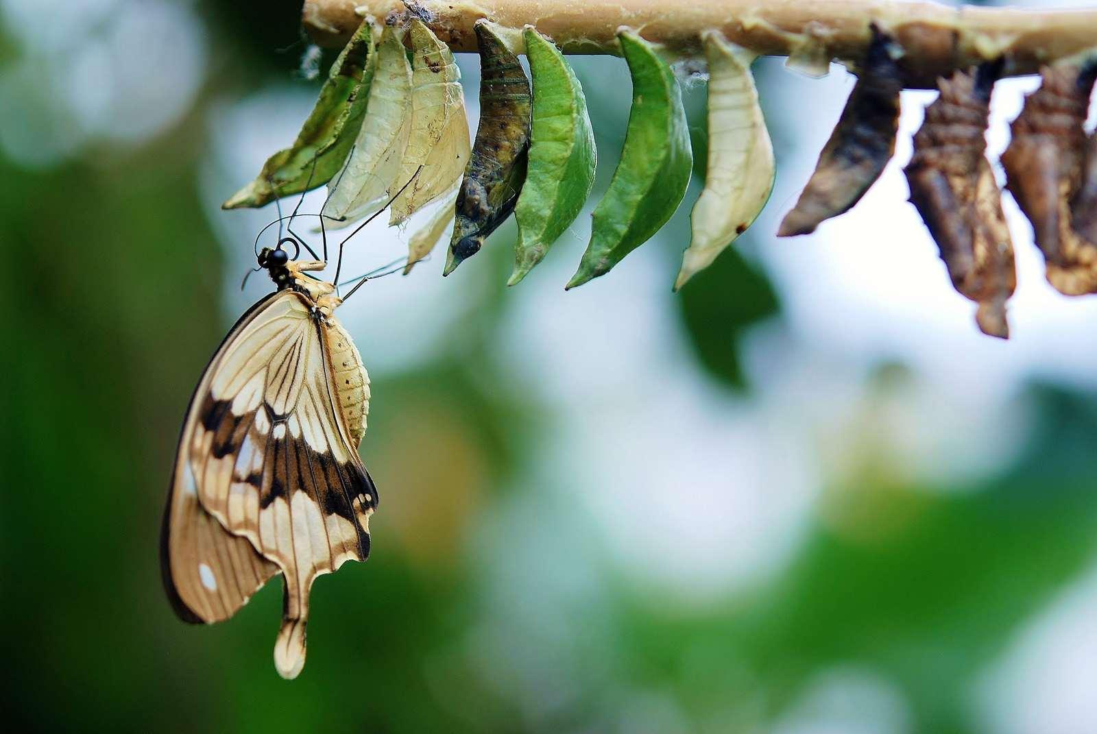 Galates 6 : 15 | Une nouvelle créature - Méditer la Bible - Présence Divine